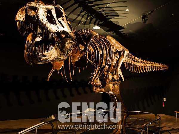 T-Rex Fossil(FP-267)