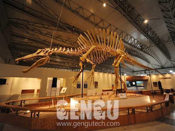 Spinosaurus Fossil(FP-269)